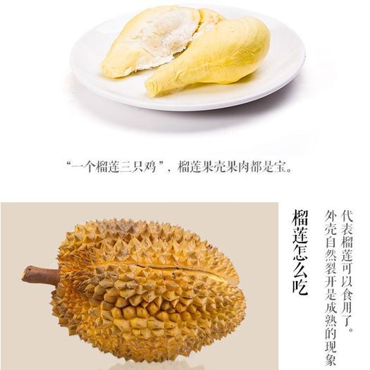 钦州灵山县 正品保证优质泰国金枕榴莲苗可带土带叶发货