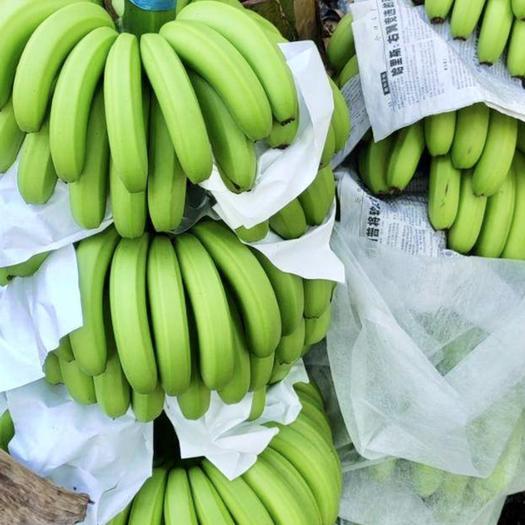 东方市 精品海南蕉现已火热上市,大量现货、质优价廉,欢迎全国老板