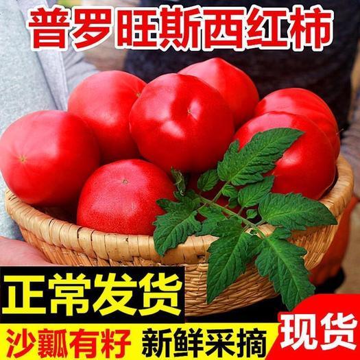 大荔縣 陜西普羅旺斯西紅柿新鮮水果5斤包郵當季整箱沙壤自然熟蔬菜