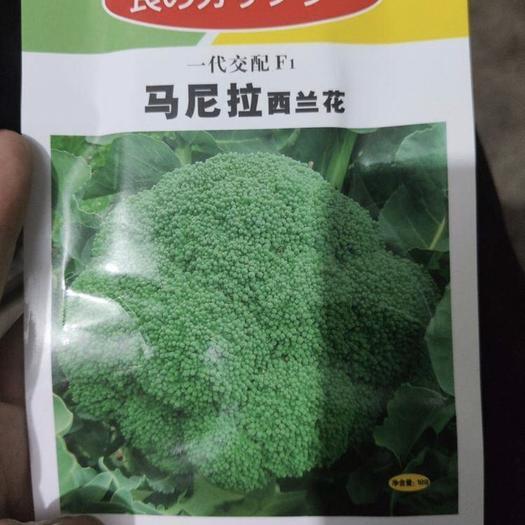 郑州中原区耐寒优秀西兰花种子 西蓝花种
