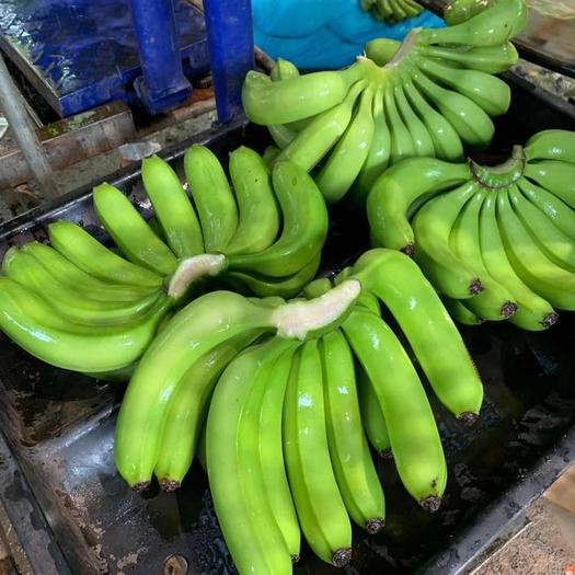 昌江黎族自治县 海南优质香蕉,诚信第一