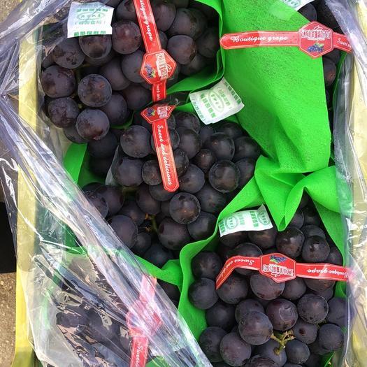 锦州北镇市巨峰葡萄 1-1.5斤 5%以下 1次果