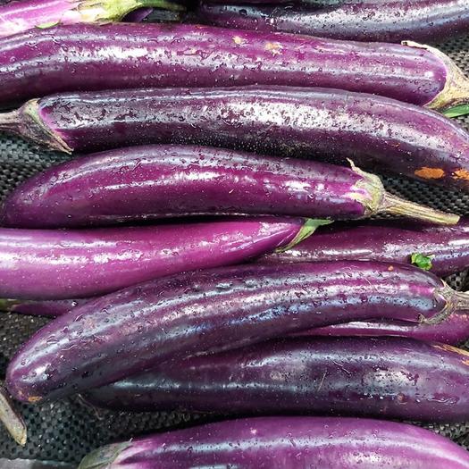 玉溪 云南高原新鲜蔬菜紫长茄子基地发货一件代发