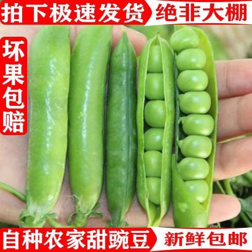 昆明 【特價包郵】新鮮豌豆 莢帶殼青 甜豆角 蔬菜類新鮮 批發