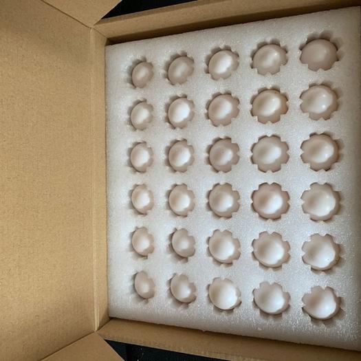 衡水深州市白鴿蛋 新鮮鴿蛋正常供貨每天5000枚左右