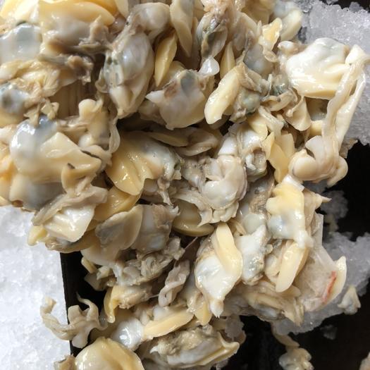 北海银海区花甲螺 花蛤肉
