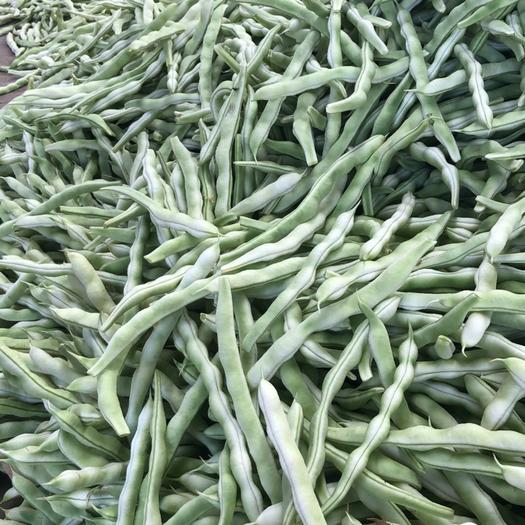 泰安岱岳区白不老四季豆 20cm以上