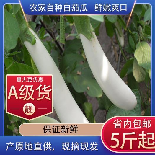 佛山 茄子白色新鲜农家自种5斤包邮起批现摘现卖靓货量大批发更优惠