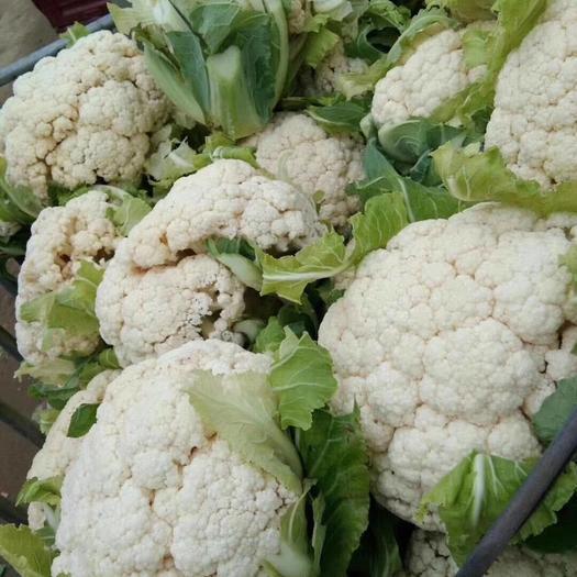 新野县有机花菜 大量有机菜花上市,白面青梗,质量保证,价格实惠