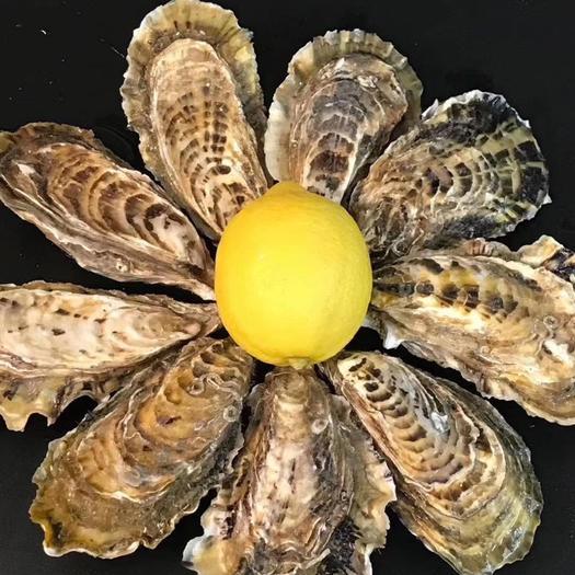 威海乳山市 乳山生蠔,乳山牡蠣,產地直發,誠信第一,擁有售后保障