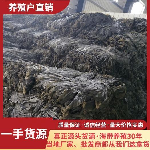 霞浦县 养殖户直销霞浦挂晒海带干净无沙无黄高质量纯一手货源