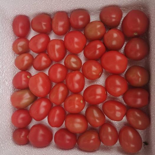 泰安泰山区 圣女果   千禧果   小西红柿  小番茄