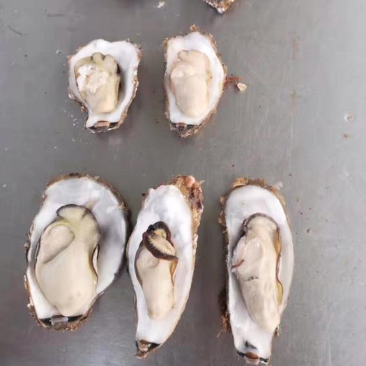 威海乳山市乳山牡蛎 海水 2-3两/只 3-4两/只 4-5两/只 5-6两/只 鲜活水产