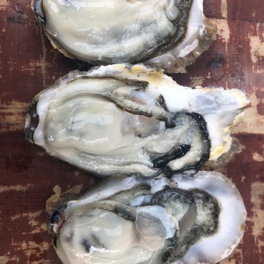 威海乳山市乳山牡蛎 乳山生蚝各规格大量出货