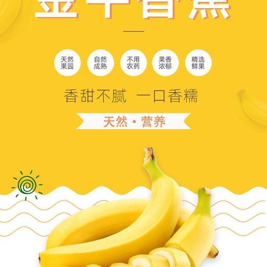 紅河金平苗族瑤族傣族自治縣 云南金平香蕉自然成熟五斤25包郵