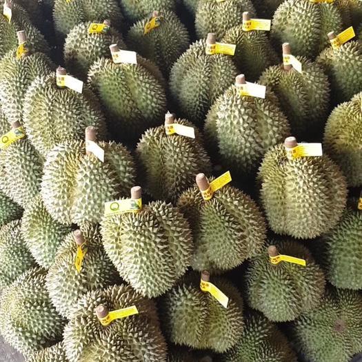 崇左江州区泰国金枕榴莲 泰国一级金枕批发起拿一件五头34斤A果