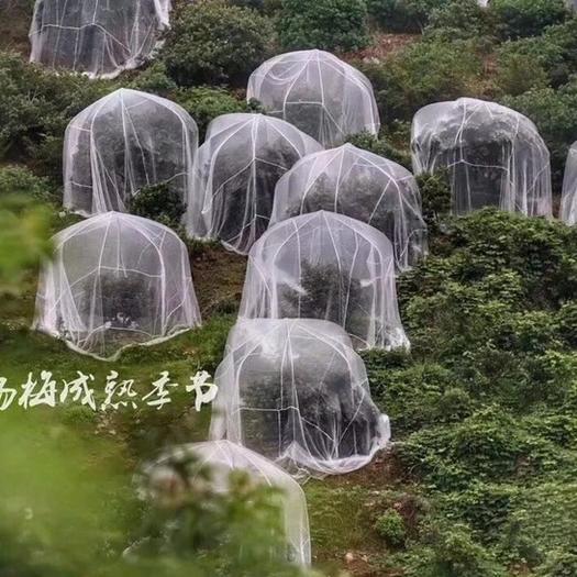 台州 杨梅网罩水果树专用罩防虫网莲雾蓝梅网桃树防鸟网罩大棚网罩
