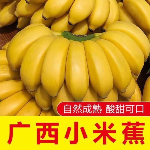 南宁 新鲜采摘小米蕉5斤9斤包邮苹果蕉香蕉帝王蕉母指蕉粉蕉一件代发
