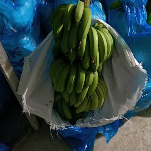 茂名高州市巴西香蕉 八成熟
