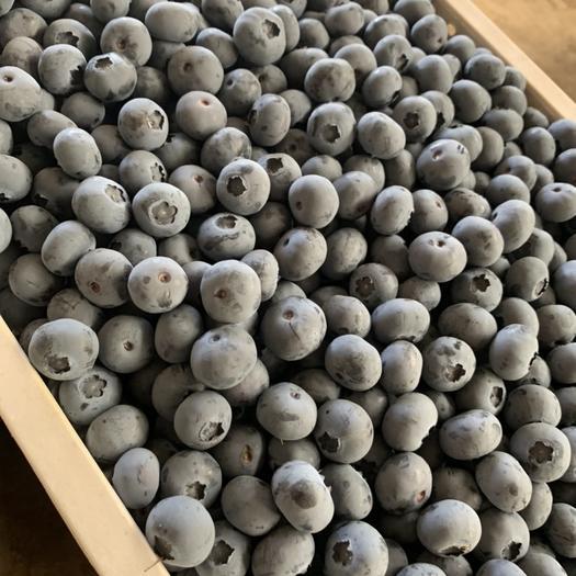 丹東振興區 2020年丹東純甜藍莓蜜斯緹 萊克西