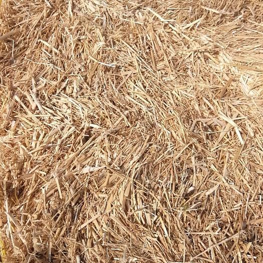通辽科尔沁区苜蓿草 羊草块