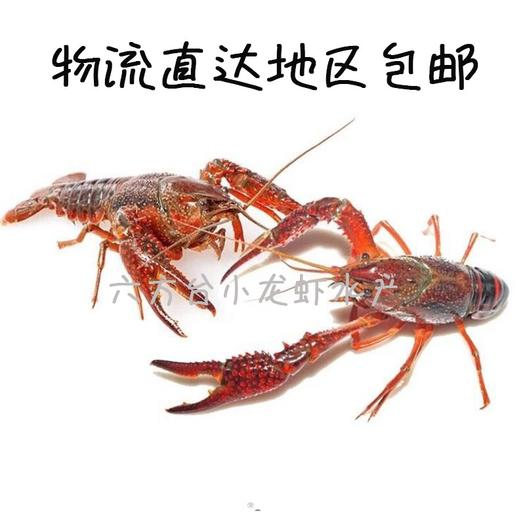 潜江市 湖北潜江清水小龙虾规格 小青2-4 中青4-6 大青6-9