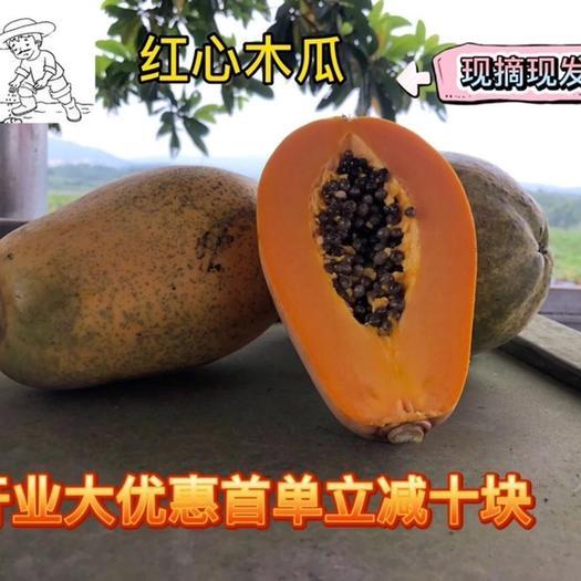 南寧橫縣 廣西紅心水果木瓜