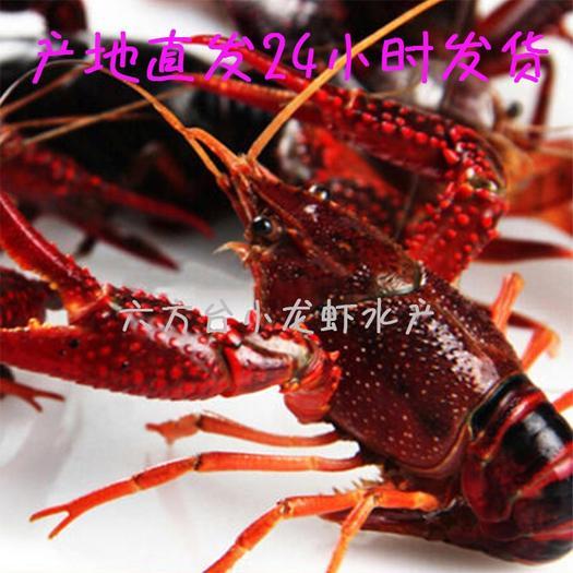 潜江市 湖北清水潜江小龙虾规格2-4,4-6,7-9大量现货