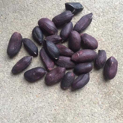 沭陽縣 富硒黑花生種子,手選果