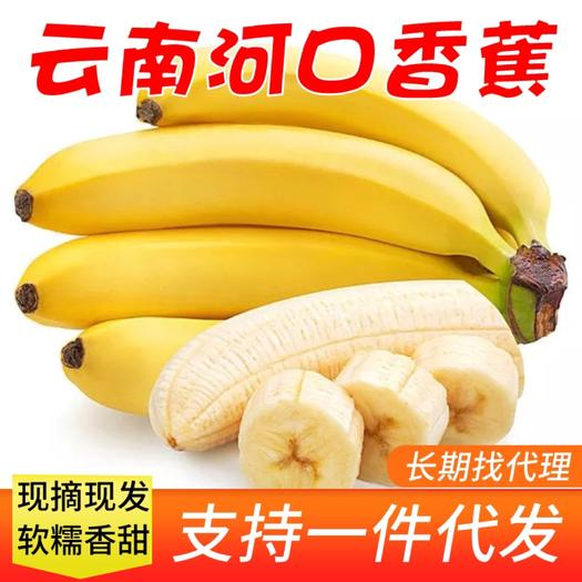 红河河口瑶族自治县 【现摘现发】云南高山河口香蕉9斤装当季新鲜甜糯香蕉现摘现发