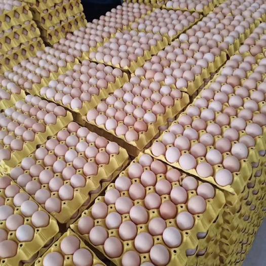 深圳南山區 乘乘蛋業通貨雞蛋