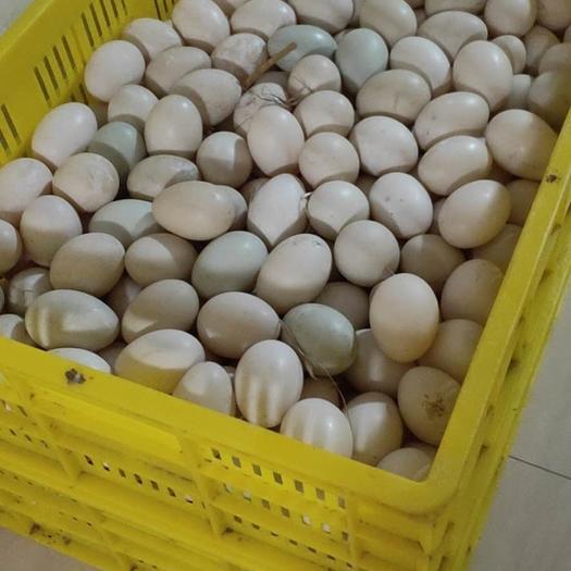 欽州欽北區 欽州海鴨蛋