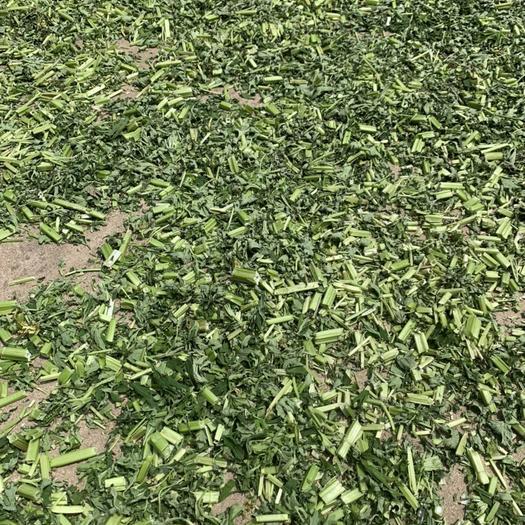 咸寧赤壁市 益母草