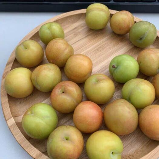 昆明 新鲜云南三月李子酸脆孕妇当季水果