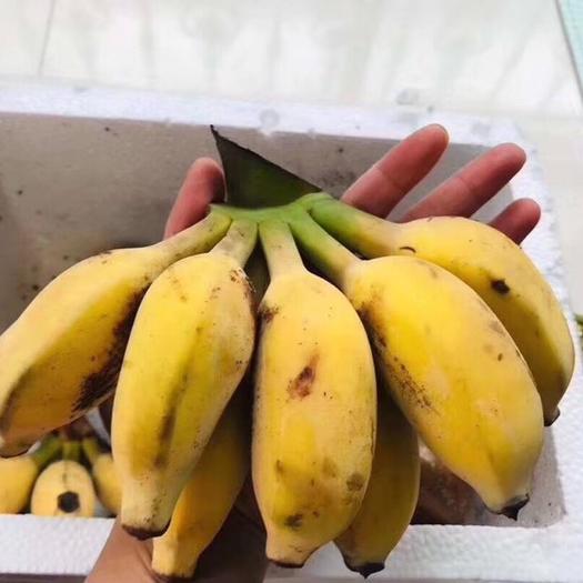 平和县 教一键发朋友圈,苹果蕉一件代发5斤27元,全国包邮!