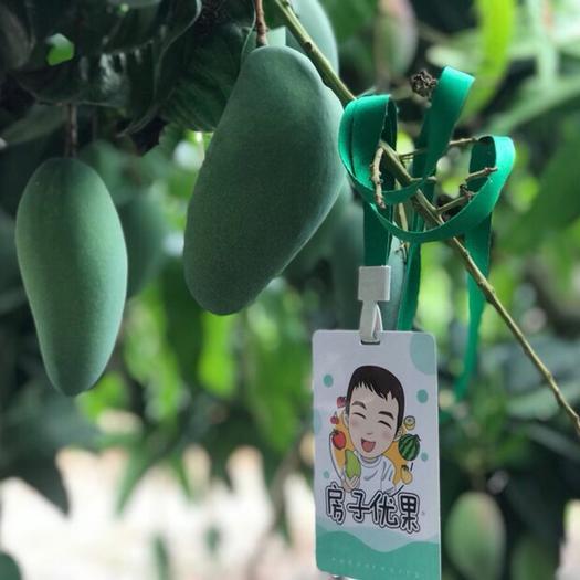 上海 现摘现发金煌芒新鲜水果5斤