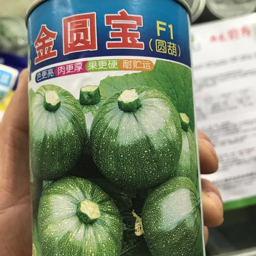 成都绿皮西葫芦种子