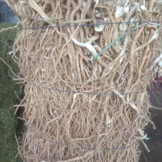丰顺县黄花倒水莲种苗 出售一吨黄花倒水莲,倒吊黄纯小根,无头,无硫磺,足干