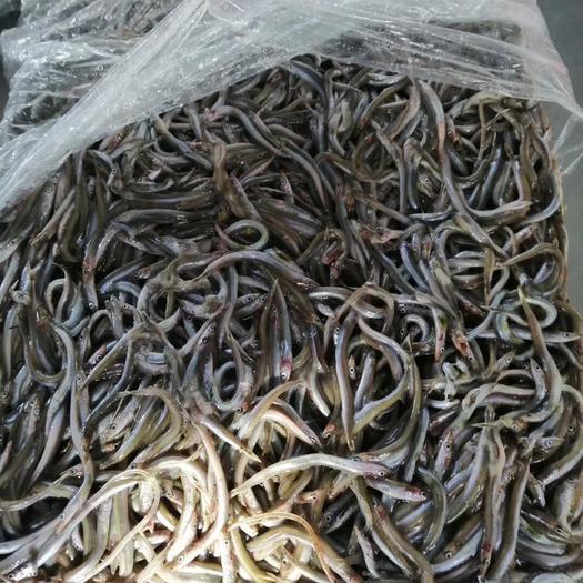 青岛池塘草鱼 饲料鱼(黑鱼、龟、貂、各种养殖鱼饲料)高蛋白鱼、油性大