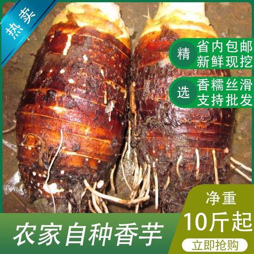 佛山 農家新鮮現挖香芋芋頭10斤起售產地直供支持大量批發