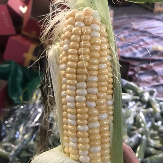 昆明 新鲜水果玉米当季蔬菜甜玉米云南特产3斤5斤9斤包邮一件代发