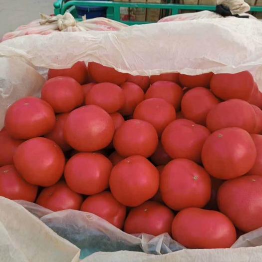 邯鄲 精品西紅柿