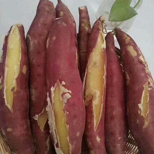 西安白心紅薯 3兩~6兩 紅皮