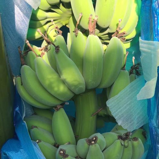 广州苹果蕉 大量苹果粉