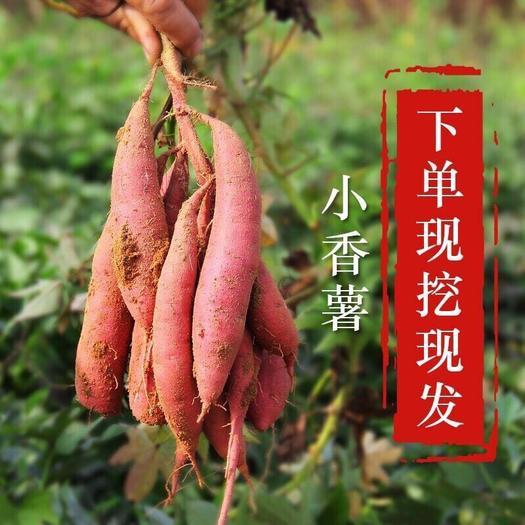 徐聞縣 【全國包郵】低至低12.8一件 紅薯紅蜜薯番薯西瓜紅蜜薯