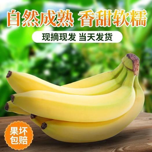 广州 广西山地农家香蕉净重9斤青香蕉装包邮青香蕉需催熟整箱约10斤