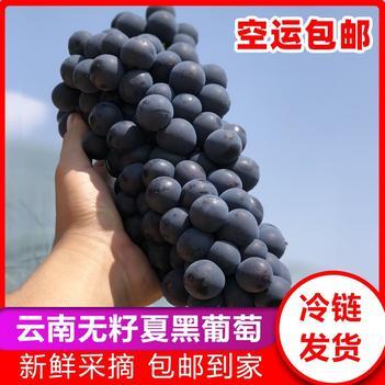 【特价包邮】现摘夏黑葡萄无籽黑蜜葡萄新鲜水果批发包邮