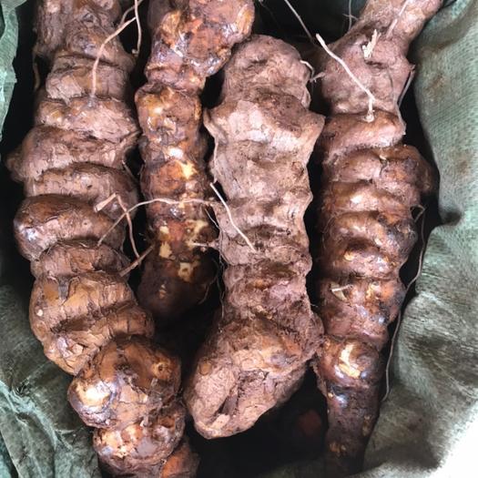 新鲜云南白肉甘甜粉质土茯苓,质量新鲜,产地直销