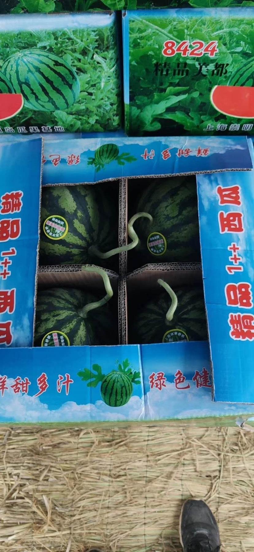 8424西瓜  精品美都,纯无籽,云南西双版纳大批量供应