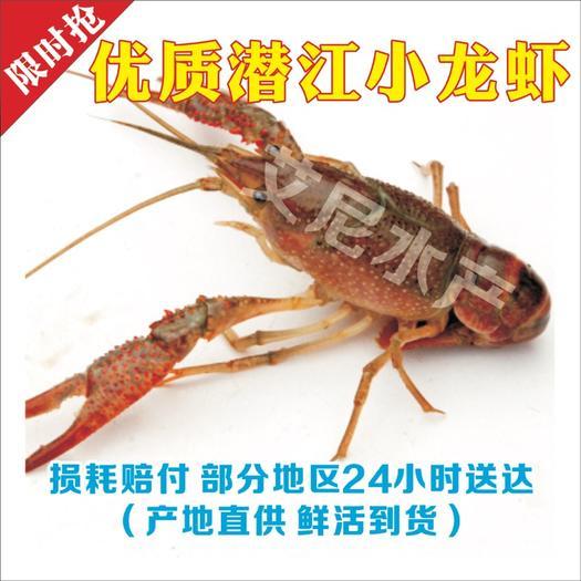 小龙虾  人气值9999+……好虾严选:价格实惠:批发价*门槛低、